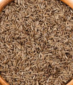 bulk carraway seeds for sale